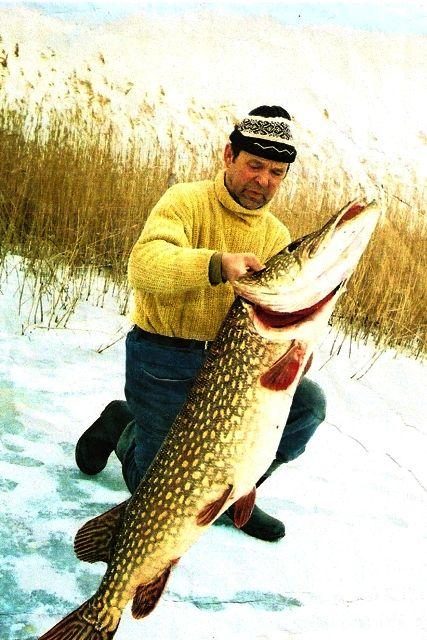 www.pikefinder.pl/images/articles/szczupak29kg1.jpg