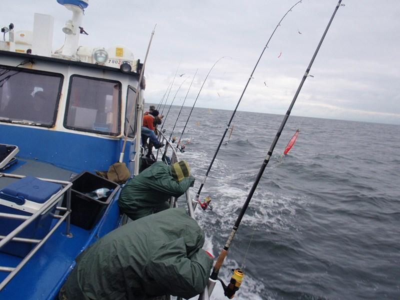 www.pikefinder.pl/images/photoalbum/album_18/sum_siluro_sumy_catfish_silure_50337d3993b9d_forumsumowe.jpg